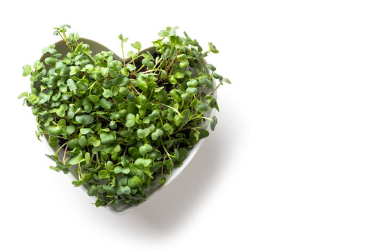 Sprouted radish seeds microgreensin in box shaped heart. View from above. Concept healthy eating. Seed Germination at home.