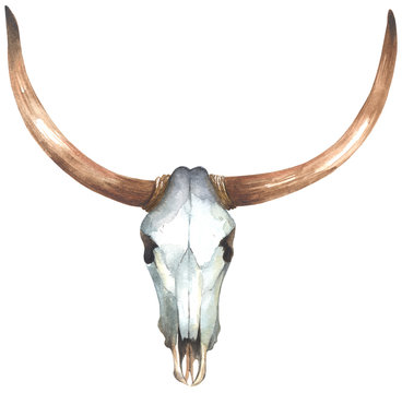 Watercolor bull skull