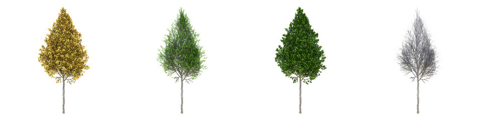 Pyramidal European hornbeam young grown real trees isolated on alpha channel with clipping path. Carpinus betulus in all seasons.3d rendering for digital composition. Papier Peint