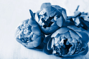 Wall Mural - trend color of the year 2020 classic blue. beautiful peony flowers bouquet