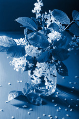 Fototapete - trend color of the year 2020 classic blue. bird-cherry blossom in vase
