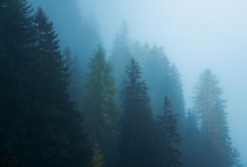 Dolomites foggy forest Fototapete