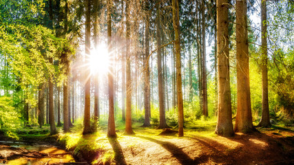 Foto op Plexiglas Bomen Spring forest with brook and bright sun shining through the trees