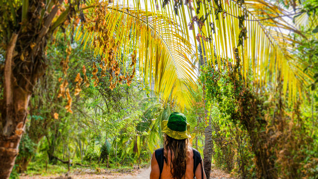 Young tourist man walking under palm trees in a tropical forest on top of a palm tree trunk in Tayrona National Park. Beautiful tall palm trees, sunny day and amazing natural landscape.