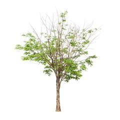 Photo sur Toile Oliviers Tree