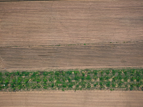 UAV drone photography top view countryside farm thailand forest tree