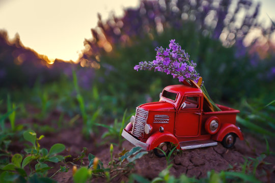 Miniature red truck in a lavender flower in the field.