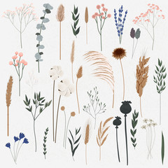 Vector set of boho plants. Beautiful hand drawn wild grass and flowers. Collection of floral elements: pampas grass, poppy heads, lavander, cotton and other. Stylish flat elements for your design