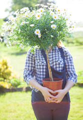 woman holding a pot with daisy flower in the garden