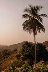 Wall Murals Deep brown palm trees at sunset