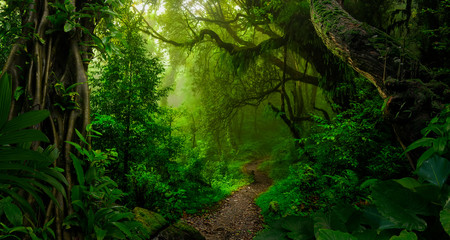 Wall Murals Road in forest Tropical jungles of Southeast Asia in august