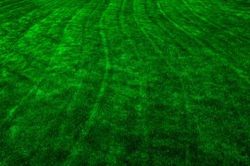 Lush Green Lawn Grass Yard Spring Growth