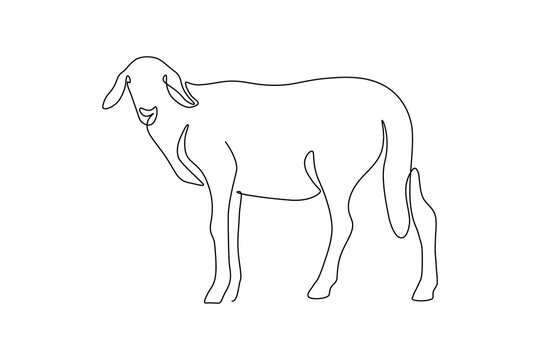 Sheep in continuous line art drawing style. Minimalist black linear sketch isolated on white background. Vector illustration