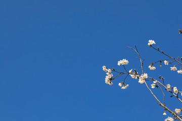 파란 하늘과 벚꽂이 보이는 아름다운 봄풍경 Fotobehang