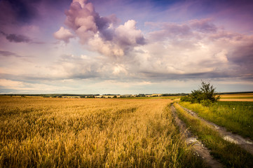 Photo sur Toile Lavende rural road in the field