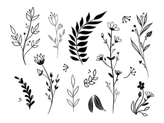 Set of hand drawn vector floral elements