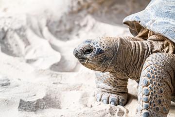 Papiers peints Tortue Portrait d'une tortue géante des Galapagos