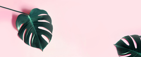 Photo sur Plexiglas Roses Tropical leaves Monstera on pink horizontal background. Abstarct Flat lay and top view. Tropical leaf of monstera pink background. Tropic monstera on pink background.