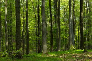 Papiers peints Forets Frische Wälder im Frühling