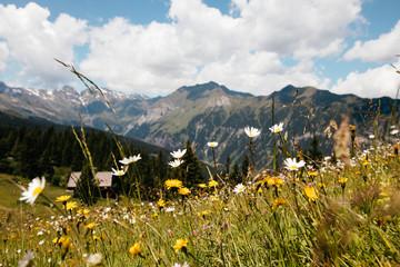 Blumenwiese in Alpenlandschaft  Fotoväggar