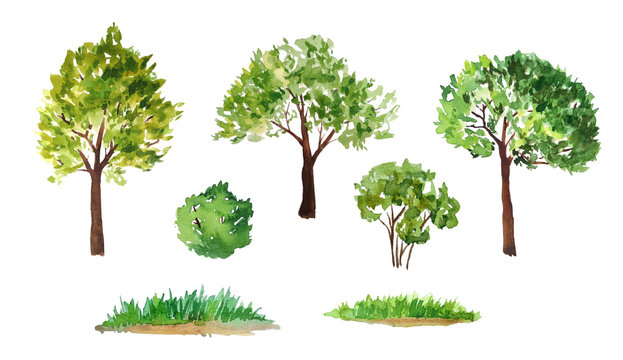 hand drawn watercolor illustration set of green summer spring tree with brown trunk bush grass. Painted landscape design element. Eco ecological biology environment concept. Forest wood woodland
