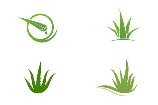 Aloe vera vector illustration design