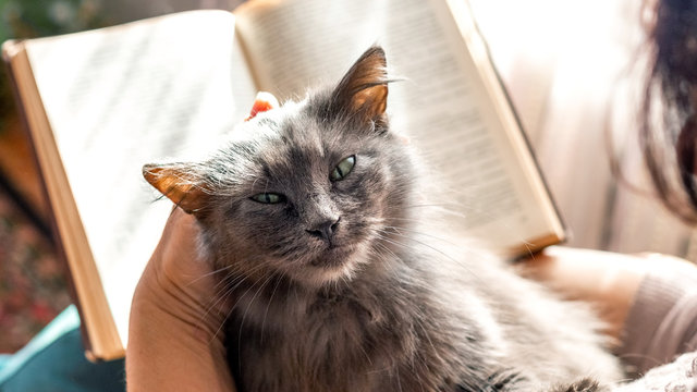 Elderly woman reading a book while holding a cat