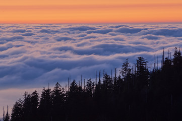 Landscape at twilight from Clingman's Dome of the Great Smoky Mountains in fog and clouds, Great Smoky Mountains National Park, North Carolina, USA Wall mural