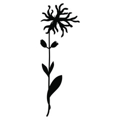 Isolated vector illustration. Branch of Ragged Robin flower. (Lychnis flos-cuculi). Black silhouette on white background.
