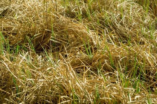 dry grass, background, texture, rotted plants
