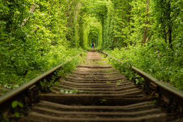 Real natural wonder love tunnel created from trees along the railway Ukraine, Klevan Wall mural