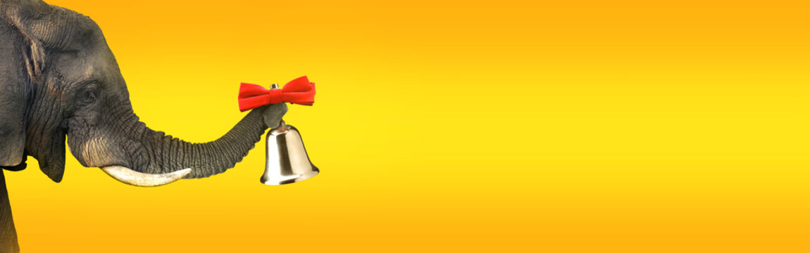 Elephant ringing a bell. Advertising concept with wide copy space for text.