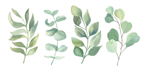 Watercolor floral illustration collection - green leaf set, for wedding stationary, wallpapers, greetings,  background. Watercolor  Eucalyptus, olive, green leaves.