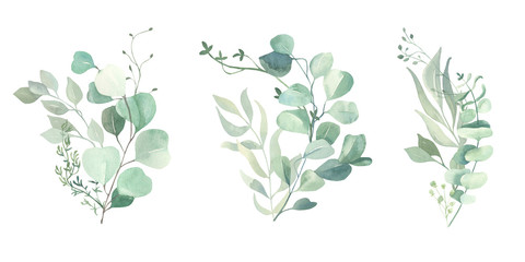 Watercolor green eucalyptus, olive  leaves. Watercolor floral illustration collection  - green leaf branches set for wedding stationary, wallpapers, background,  greetings.