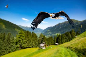 Zwei Adler fliegen in großer Höhe mit ausgebreiteten Flügeln an einem sonnigen Tag in den Bergen. Fototapete