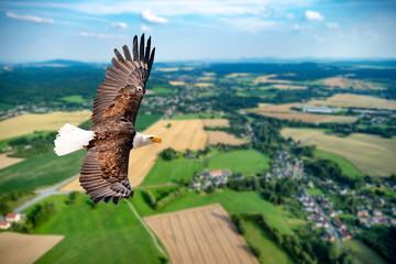 Adler fliegt in großer Höhe mit ausgebreiteten Flügeln an einem sonnigen Tag im Mittelgebirge. Fototapete
