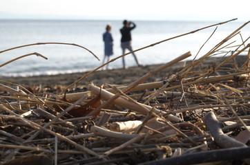 海岸に打ち上げられている藁のずっと向こうに人がいる There are people far beyond the straw being launched on the shore. Wall mural