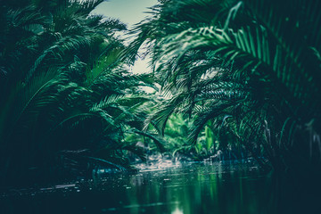 natural green filter, tropical forest with lake