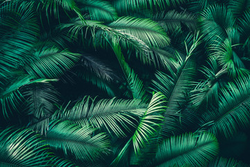 tropical forest natural background, nature scene in green tone style, concept of relax and freedom lifestyle using for spa and travel