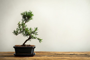 Keuken foto achterwand Bonsai Japanese bonsai plant on wooden table, space for text. Creating zen atmosphere at home