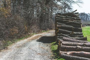 drewno w lesie, wycinka drzew Wall mural