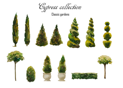 Set of watercolor cypress natural and trimmed shapes for landscape design, isolated on white background. Hand painted elements for classic formal gardens