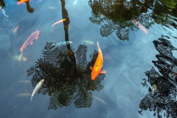 Autocollant pour porte Zen zen pond background