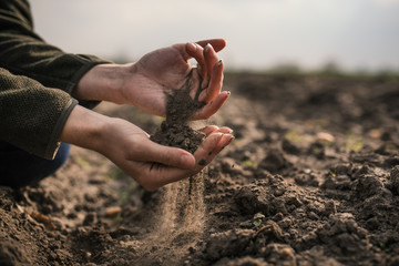 Fototapeta Female hands pouring a black soil in the field. Female agronomist testing a quality of soil. Concept of agriculture. obraz