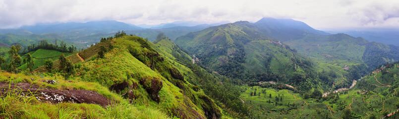 Panoramic view of tea plantations. Munnar, Kerala, India Fotomurales