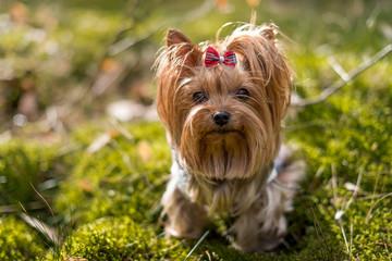Obraz Portret psa w lesie. - fototapety do salonu