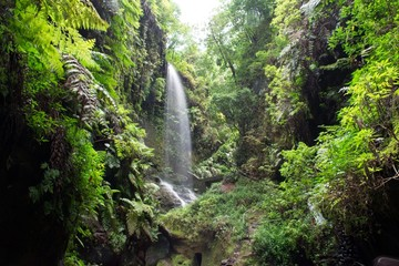 Photo sur Aluminium Taupe Waterfall, Los Tilos, La Palma