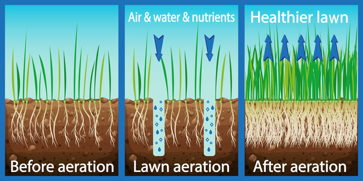 Aeration of the lawn. Enrichment with oxygen water and nutrients to improve lawn growth. Before and after aeration: gardening, lawn care services. Advantages, aeration