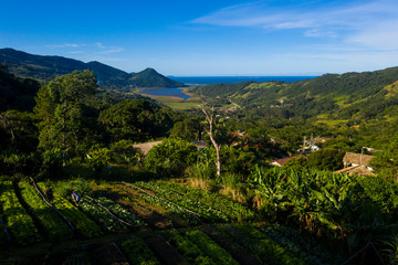 Organic Farm in a Quilombola Community in Brazil. Top view of the plantation with farmers working on the field.
