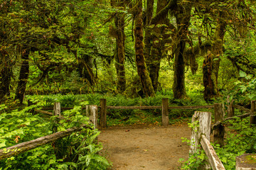 Rain forest in the pacific northwest